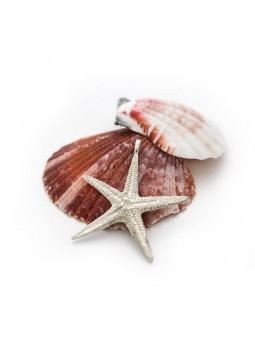 Obesek morska zvezda